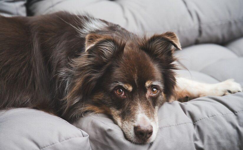 Pena de prisão até 1 ano para quem maltratar animais de estimação